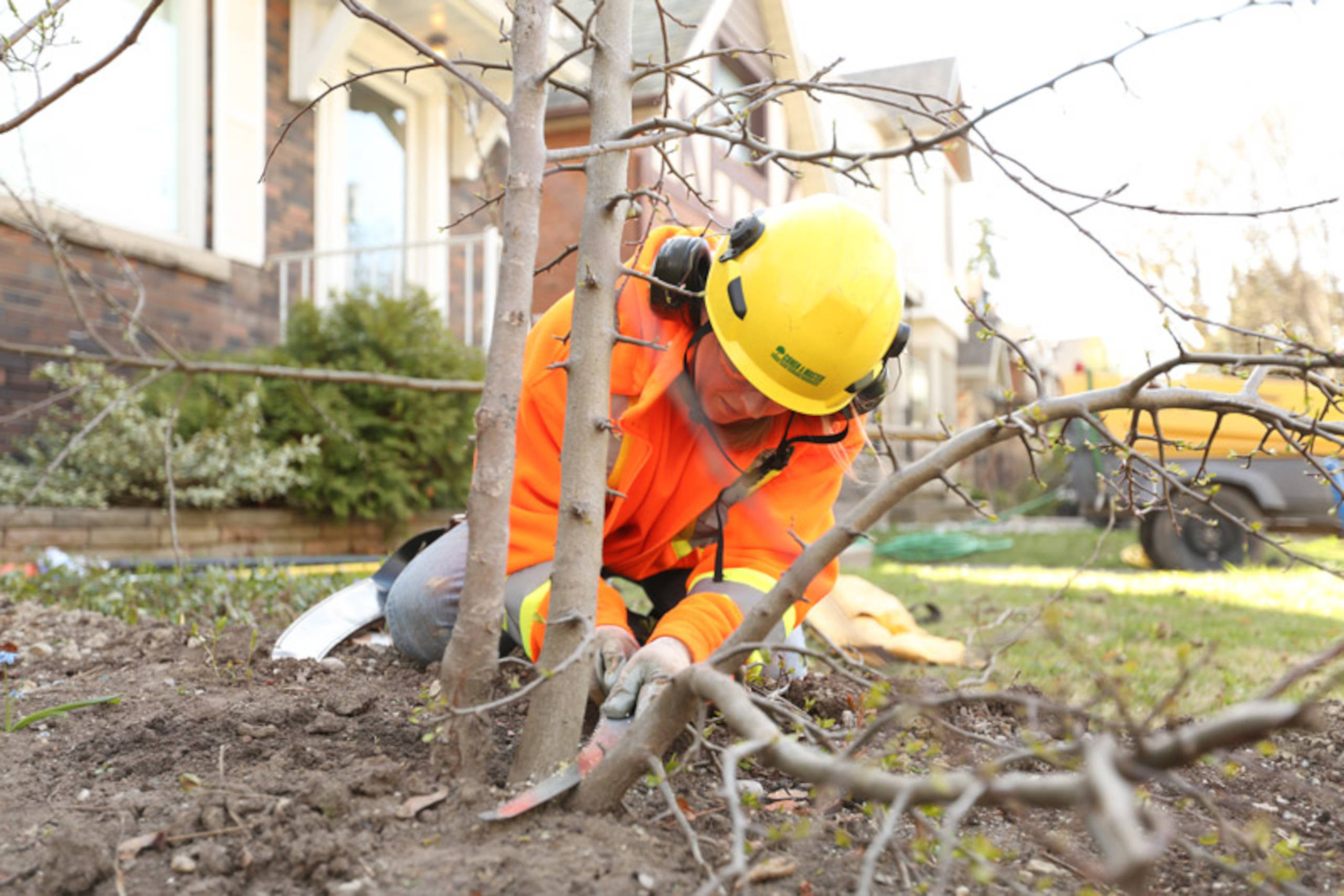aborist pruning