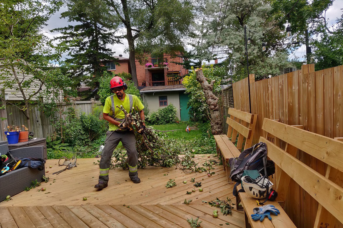 adult worker cutting trees